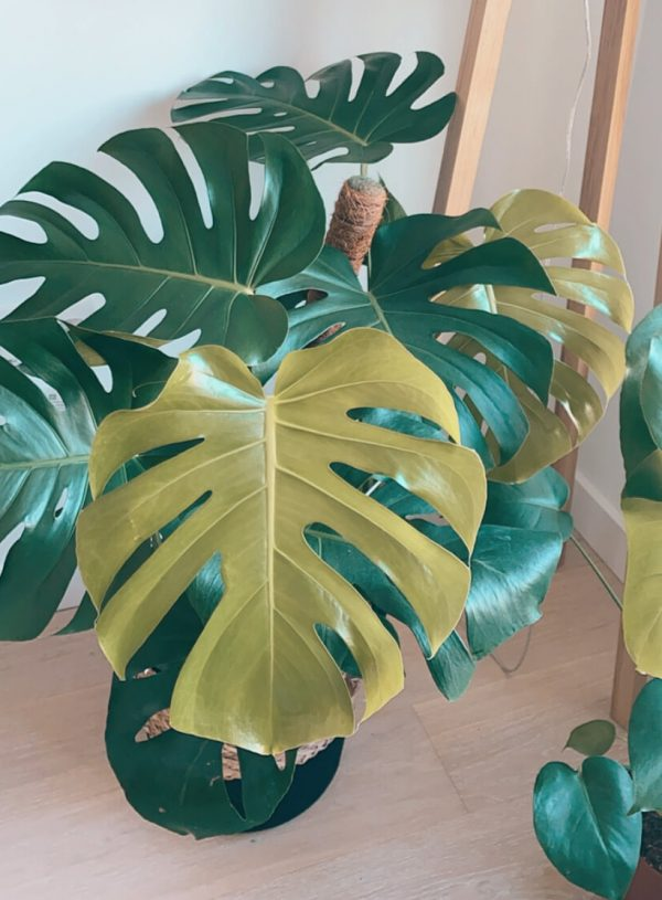 Why are houseplants good for you